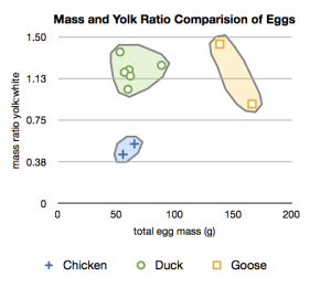 Plot of total egg mass in grams versus the yolk to white mass ratio. The chicken, duck, and goose eggs plot in distinct regions.